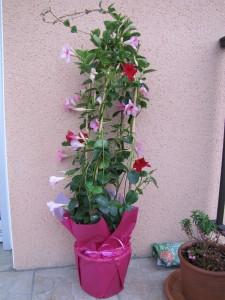Cadeaux - plante