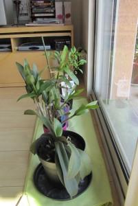 Orchidées et Bonzaï
