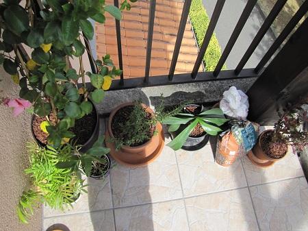 Balcon plantes