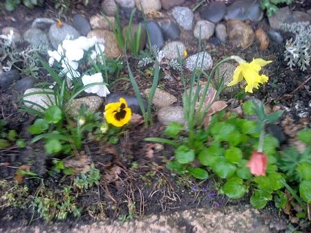 fleurs_mars2013