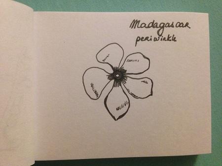 croquis-fleur