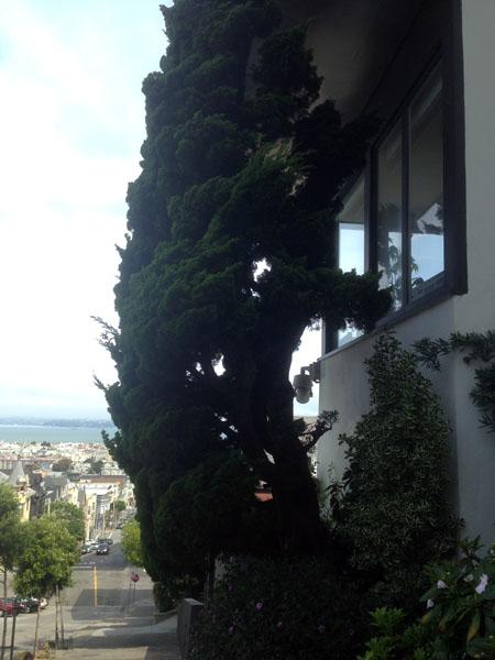 Celle là, c'est juste parce que j'aimais bien l'arbre. Voilà.