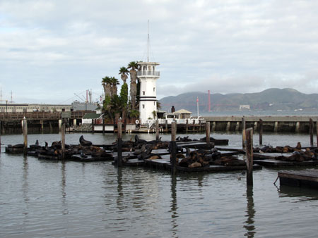 SF-Pier39-2