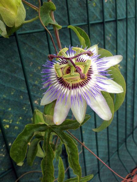 bonheur-matin-fleur-072014-1