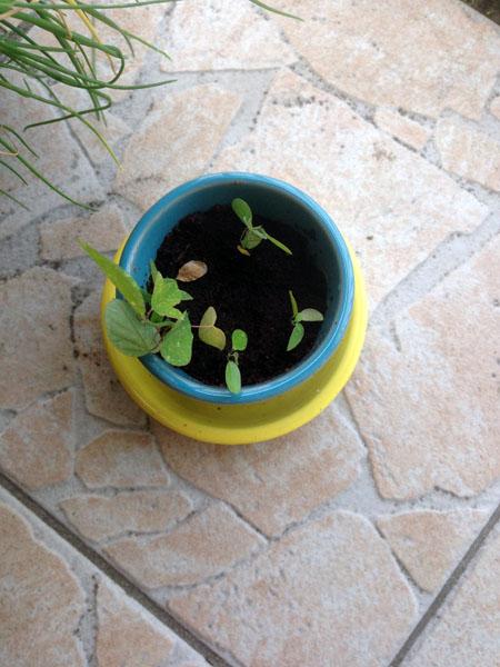 Elle est pas trop choupi ma plante ?