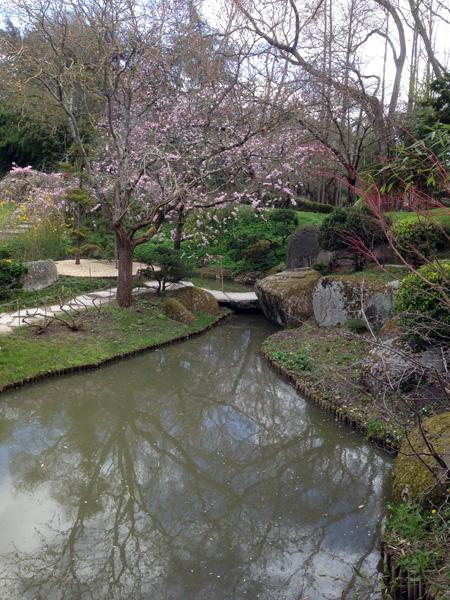 Mnemosune-jardin-jap-4